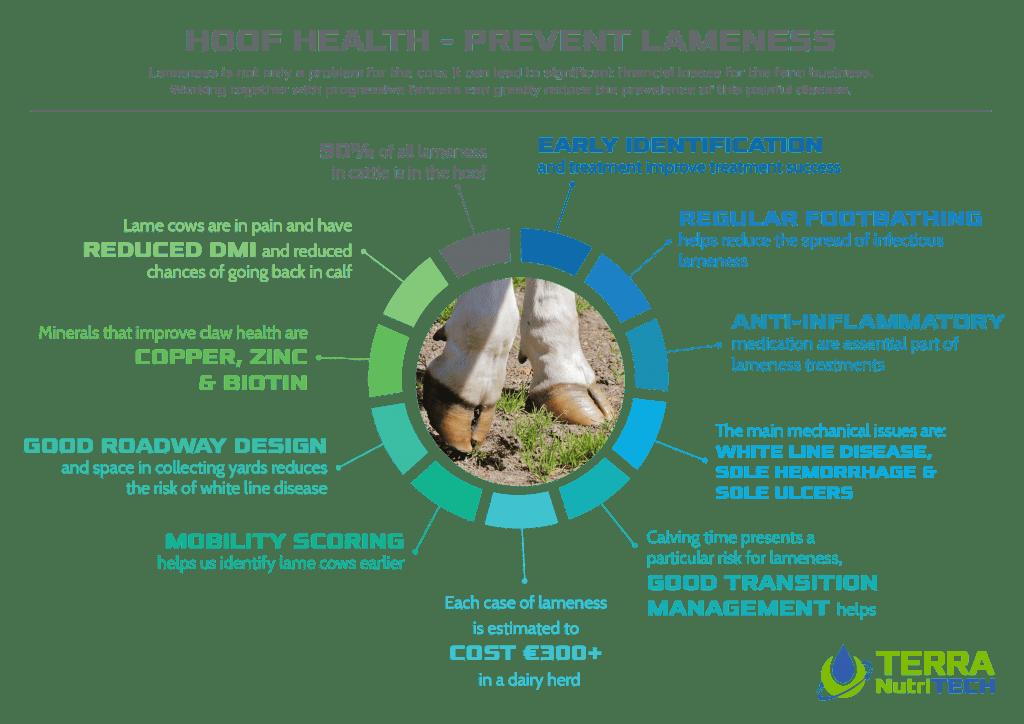 lameness, hoof health