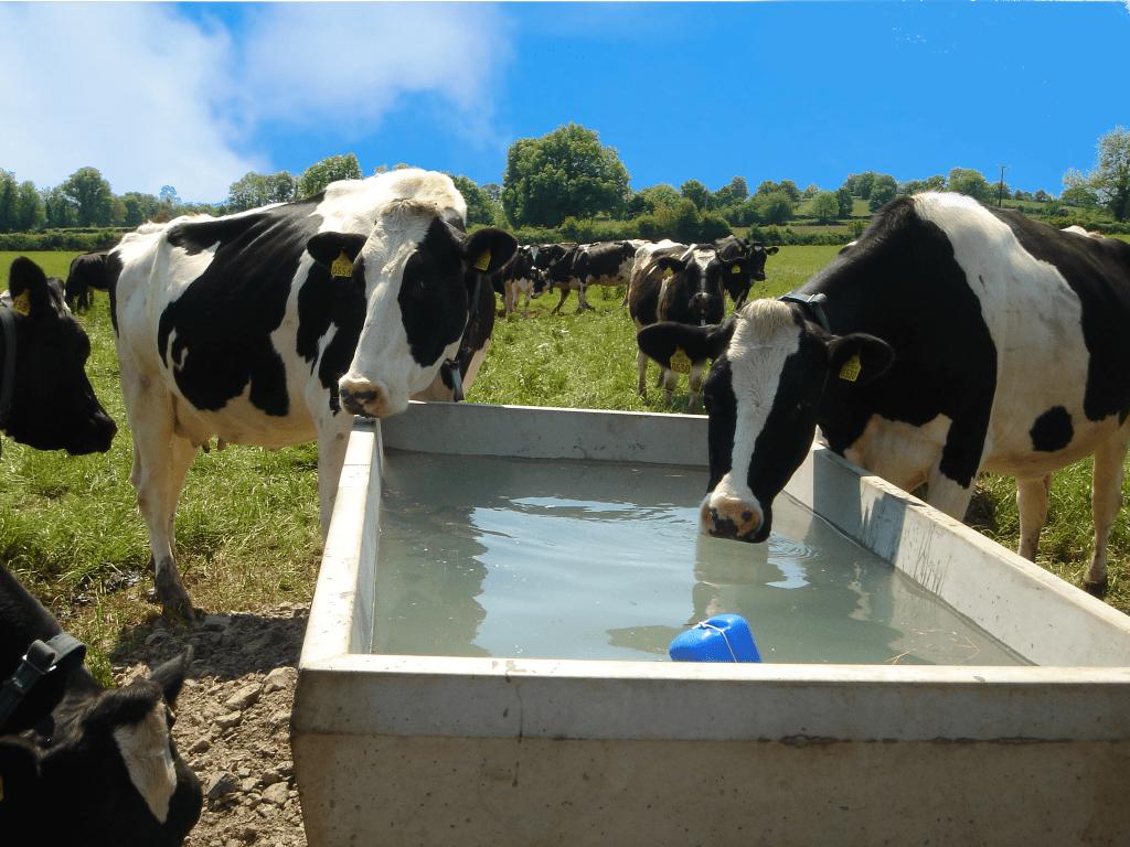 water trough minerals