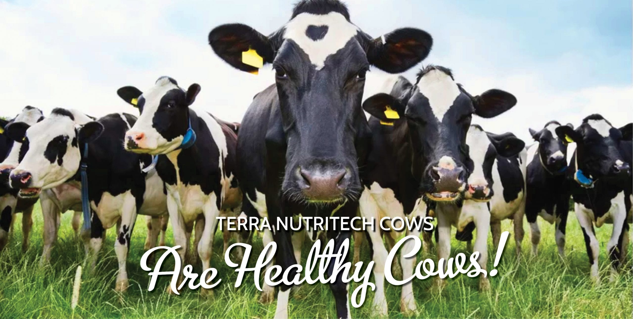 AMR, Minerals for cows